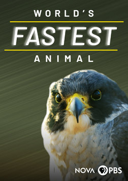 World's Fastest Animal